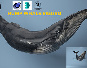 hump whale rigged 3D model