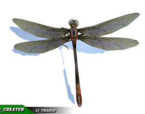Low-Poly Dragonfly Rigged Animated 3D Model animated