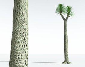 EVERYPlant Compact-Leafed Sigillaria 01 --18 Models--