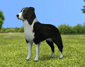 Border Collie 3D