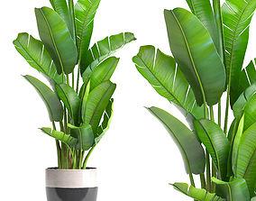 3D model ravenala Ravenala palm
