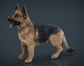German shepherd 3D asset