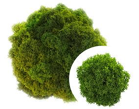 3D Stabilized moss plant
