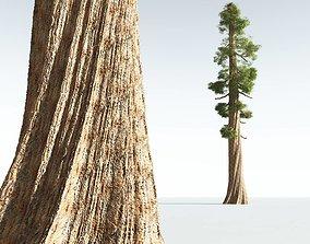3D EVERYPlant Coastal Redwood 11 --12 Models--