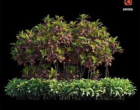 Croton plant set 07 3D