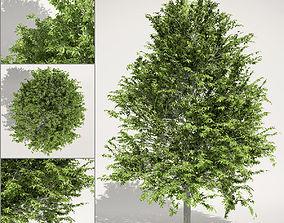 wood 3D model Oak Tree