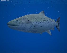Atlantic Salmon 3D