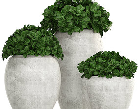 3D model Collection of plants in pots