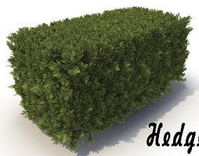 3D model hedge Hedge