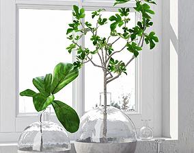 3D model Fig Plants