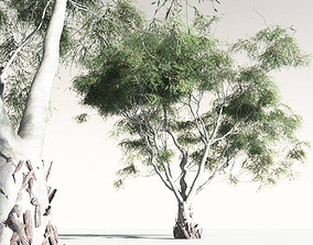 3D model EVERYPlant River Red Gum 13