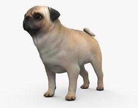 Pug HD 3D model