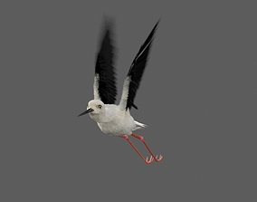 3D model Realistic Stilt rigged bird with feather