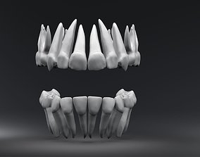 Primary Teeth with Pulp Cavity 3D printable model