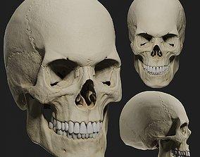 3D PBR male skull model