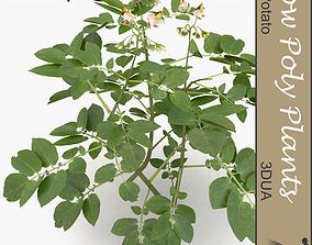 Potato plant 3D asset