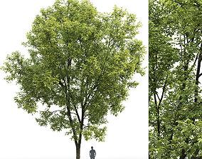 ash-tree Ash-tree 07 H15m 3D