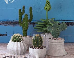 3D model Cactus Set