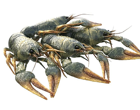 3D Crawfishes