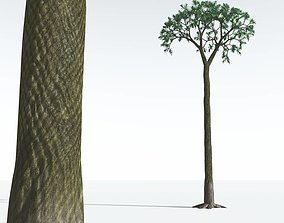 EVERYPlant Spiny Scale Tree 09 --15 Models-- 3D