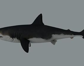 3D model Megalodon Shark