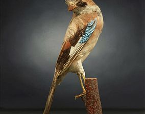 Bird Photorealistic Posed 3D model game-ready