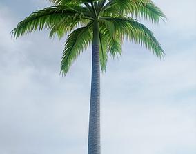 Palm Trees 3D model PBR