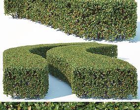 Cotoneaster lucidus Nr6 wide rectangular hedge 3D model