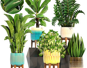 3D tropic Collection plants