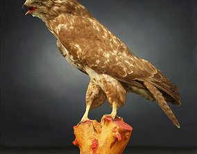 Bird Photorealistic Posed biology 3D model low-poly
