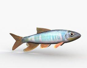 3D Zacco Platypus Oikawa Fish
