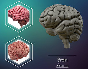 intellect human Brain 3D model Ready to 3D print