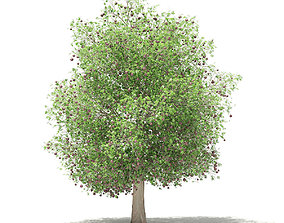 Common fig tree with fruits 3D