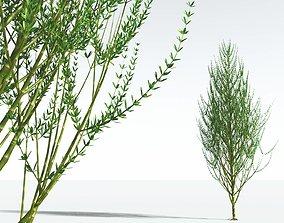 3D EVERYPlant Ridged Horsetail Tree 03 --12