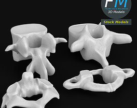 Anatomy - Human vertebrae set 3D model