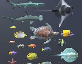 Coral Fish Pack 1 3D model