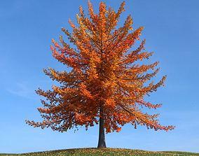 Fall Tree 3D model