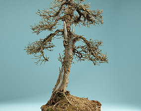 RAW SCAN Dead Bonsai Tree High Poly 04 3D