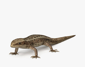 3D Common Lizard HD