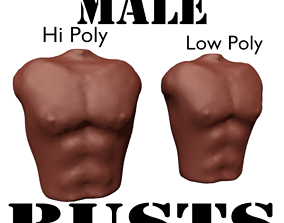 3D model Male Torso Bust