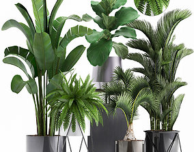 Collection of Exotic plants hyophorbe 3D model