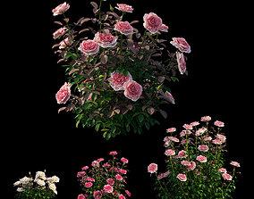 3D Rose plant set 21