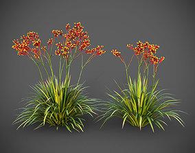 XfrogPlants Anigozanthos Hybrid 3D model