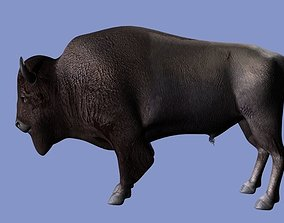 3D American Bison