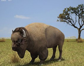 3D asset American Bison Buffalo Bison Bison