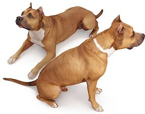 3D Staffordshire Terrier Collection x2