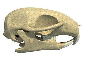 Detailed Squirrel Skull 3D animals