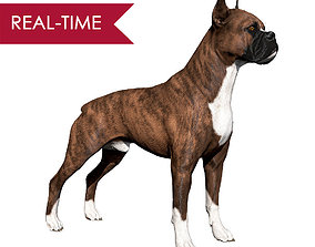 Boxer Real-Time 3D asset