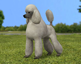 3D model Poodle
