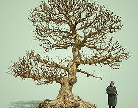 Dead Tree 3D plant